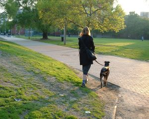 woman-walking-a-dog-27207-m