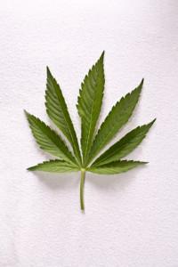 dutch-weed-1595294-200x300