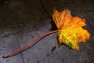 leaf-on-the-pavement-1563587